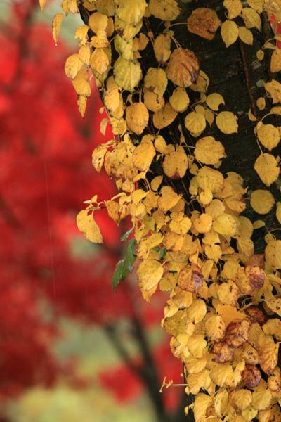 福島の紅葉2